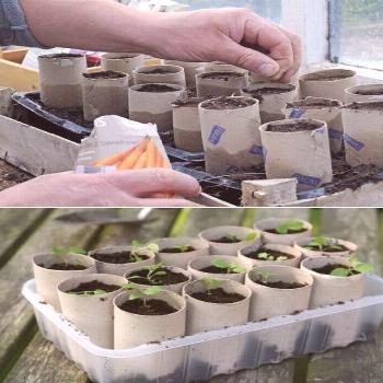 Toilet rolls & seeds {**Same uses as other tutorial, except TP roll is not cut in half**}